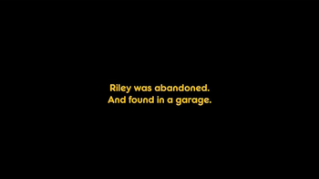 Pedigree TV Spot, 'Riley' - Thumbnail 3