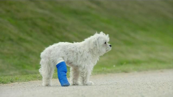 Amazon: Dog in Cast