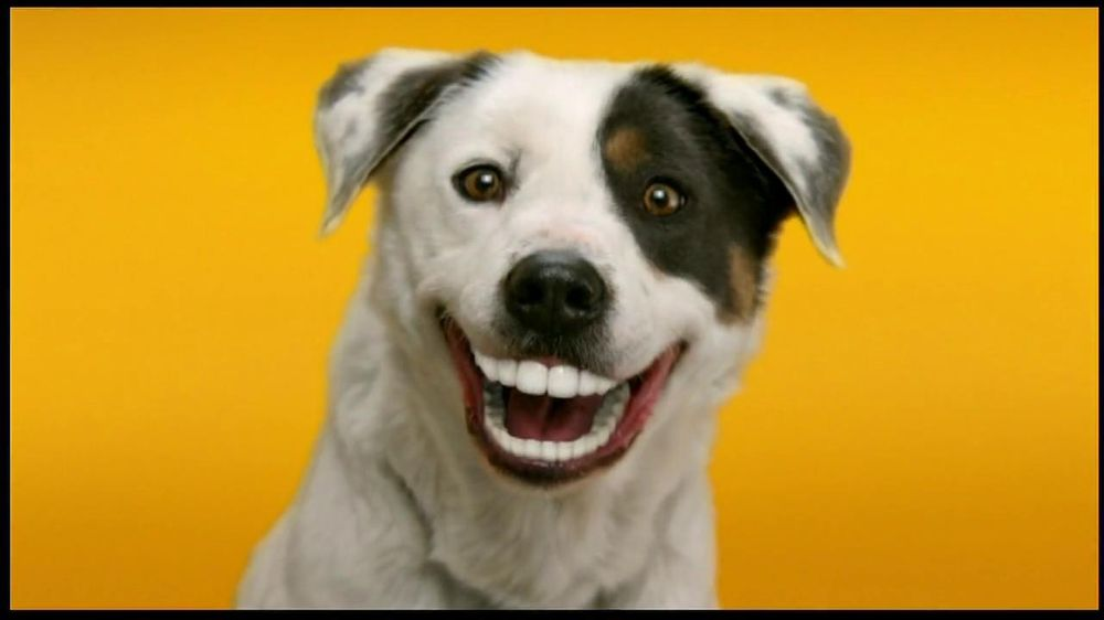 Ideal Balance Dog Food >> Pedigree Dentastix TV Spot, 'Doggie Dentures' - iSpot.tv