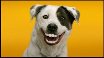 Pedigree Dentastix TV Spot, 'Doggie Dentures'