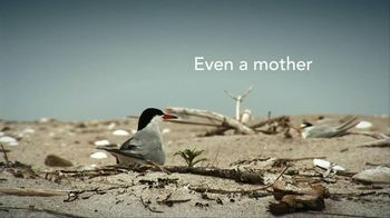 Dawn TV Spot, 'Saving Wildlife ' - Thumbnail 4