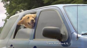 Shelter Insurance TV Spot, 'Car Dogs'