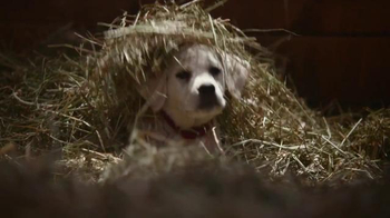 Budweiser: Lost Dog