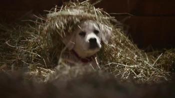 Budweiser: Lost Dog