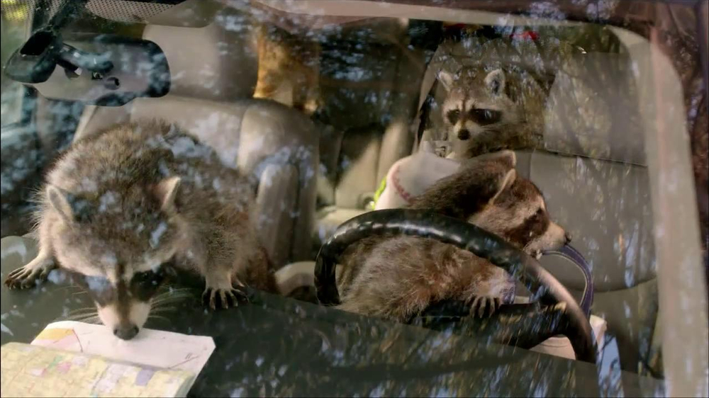 Walgreens TV Spot, 'Road Trip and Raccoons' thumbnail