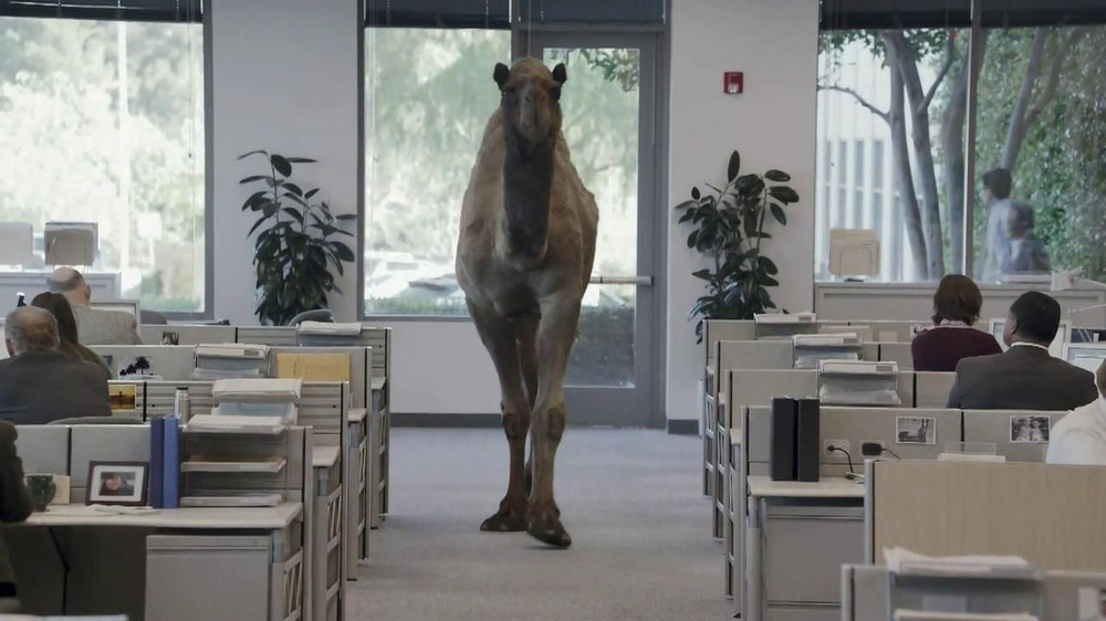 GEICO TV Spot, 'Camel on Hump Day' - Screenshot 2