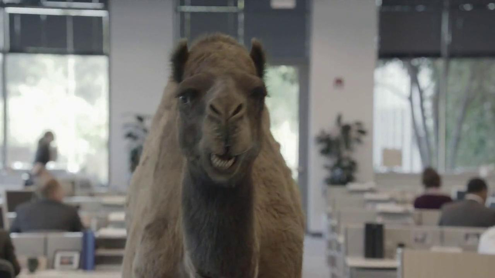 GEICO TV Spot, 'Camel on Hump Day' - Screenshot 5