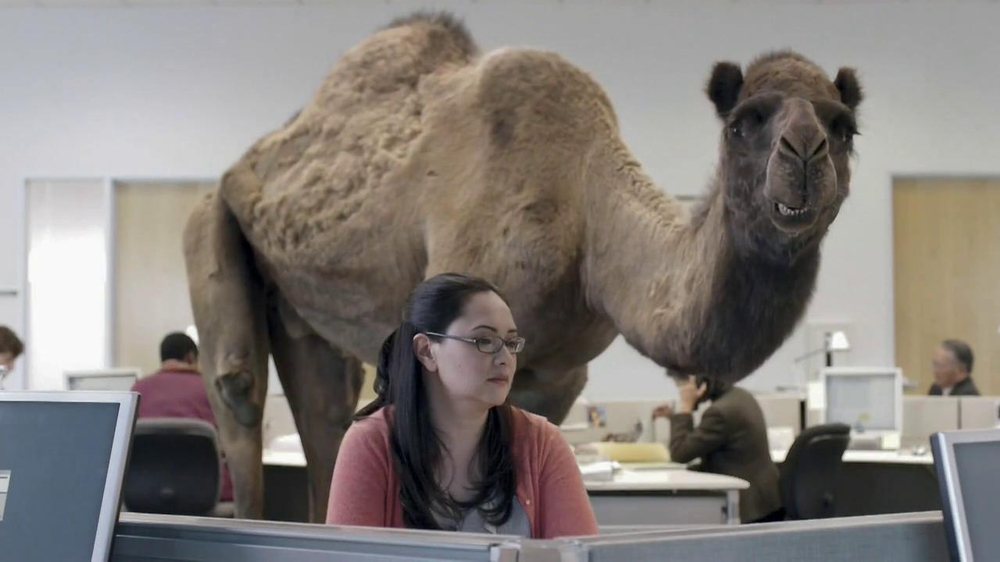 GEICO TV Spot, 'Camel on Hump Day' - Screenshot 6