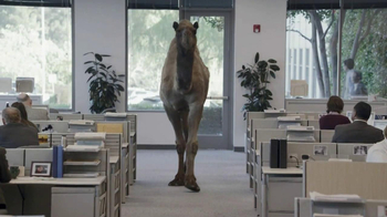 GEICO TV Spot, 'Camel on Hump Day' - Thumbnail 3