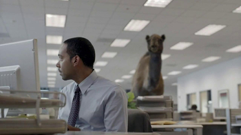 GEICO TV Spot, 'Camel on Hump Day' - Thumbnail 4