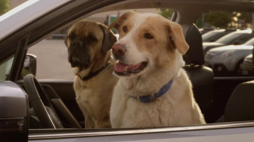 Subaru TV Spot 'Dog Tested, Dog Approved' - Screenshot 4
