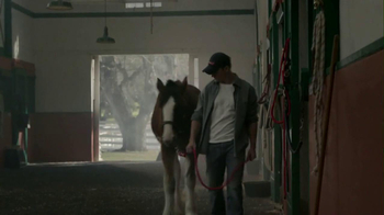 Budweiser 2013 Super Bowl TV Spot, 'Brotherhood' Song by Fleetwood Mac