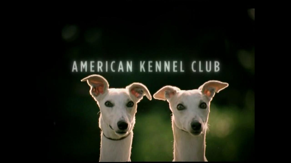 American Kennel Club TV Commercial, 'Reunions' - iSpot.tv