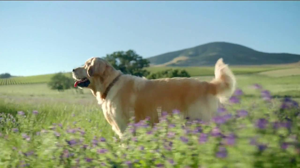 Nutro Natural Choice Wholesome Essentials TV Spot, 'A Nutro Story' - Screenshot 7