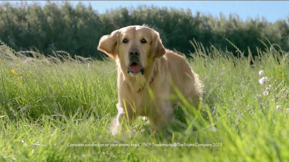 Nutro Natural Choice Wholesome Essentials TV Spot, 'A Nutro Story' - Screenshot 1