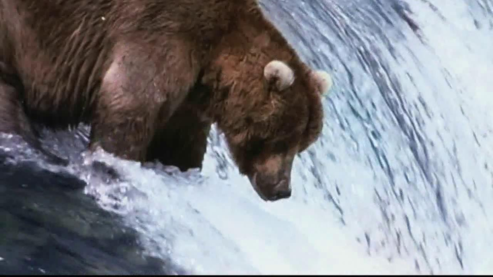 Birds Eye Steamfresh Chef's Favorites TV Spot, 'Fishing Bears' - Screenshot 2