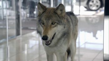 Cars.com 2013 Super Bowl TV Spot, 'Wolf Drama'