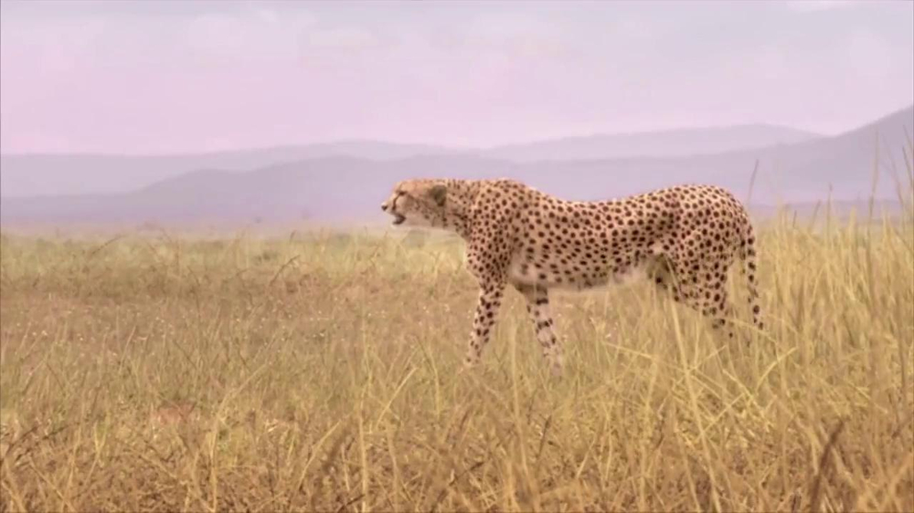 Skechers Super Bowl 2013 Teaser, 'Man vs. Cheetah' - Screenshot 3