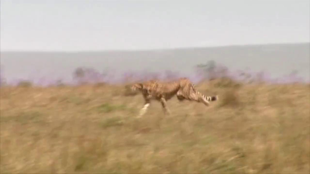 Skechers Super Bowl 2013 Teaser, 'Man vs. Cheetah' - Screenshot 4