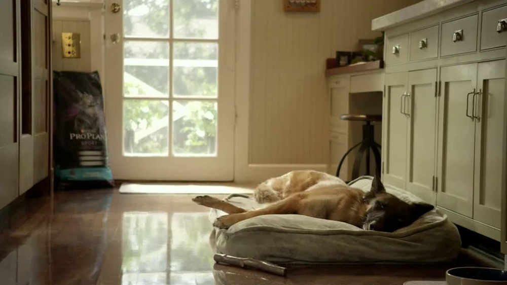 Purina Pro Plan TV Spot, 'If Your Dog Can Dream It: Fetch' - Screenshot 1