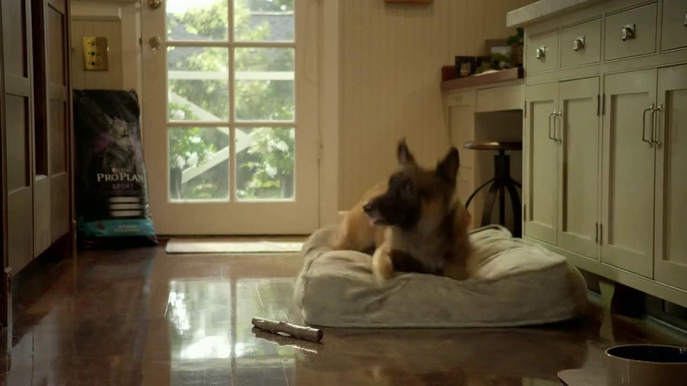 Purina Pro Plan TV Spot, 'If Your Dog Can Dream It: Fetch' - Screenshot 10
