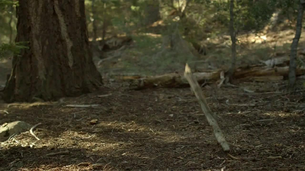 Purina Pro Plan TV Spot, 'If Your Dog Can Dream It: Fetch' - Screenshot 2