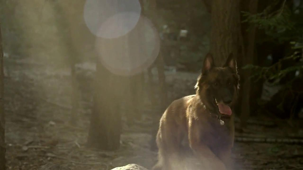Purina Pro Plan TV Spot, 'If Your Dog Can Dream It: Fetch' - Screenshot 8