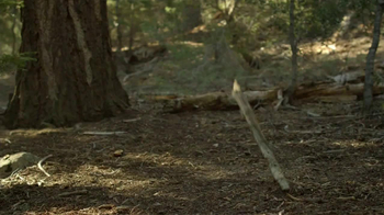 Purina Pro Plan TV Spot, 'If Your Dog Can Dream It: Fetch' - Thumbnail 2