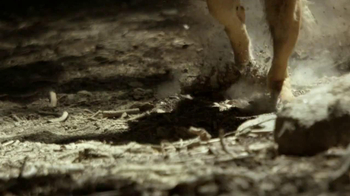 Purina Pro Plan TV Spot, 'If Your Dog Can Dream It: Fetch' - Thumbnail 5