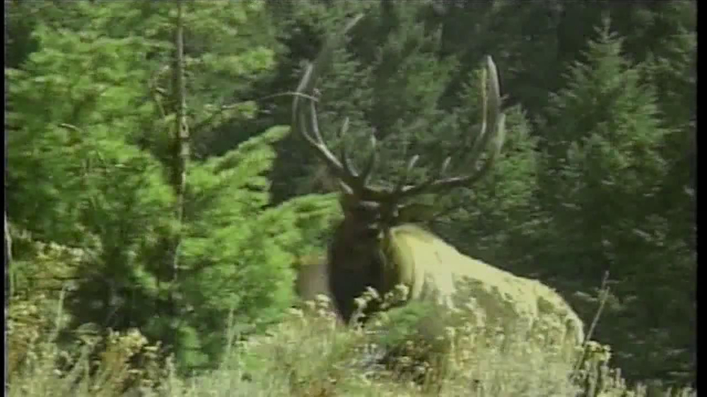 montana fish wildlife parks tv commercial 39 elk hunting ForMt Fish Wildlife And Parks