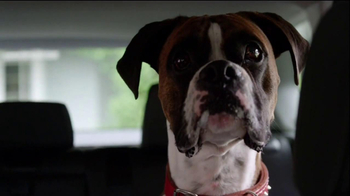 BMW TV Spot, 'Neutering' - Thumbnail 8