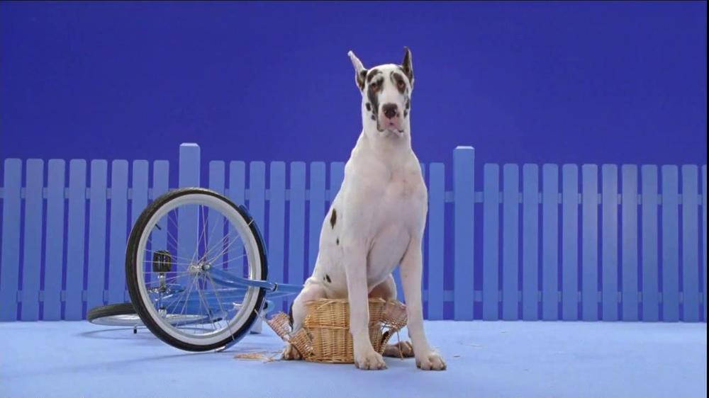 Cesar Dog Food Commercial Big Dogs