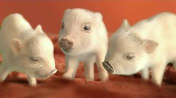 Little Piggies thumbnail