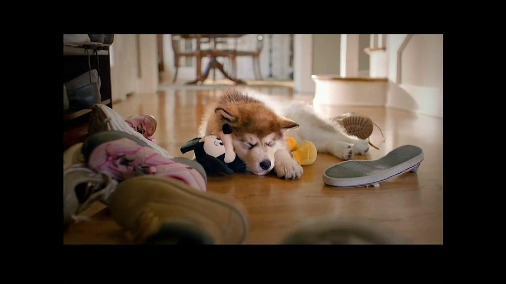 PetSmart TV Spot, 'Dog Types' - Screenshot 3