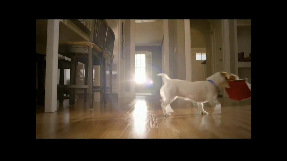 PetSmart TV Spot, 'Dog Types' - Screenshot 6