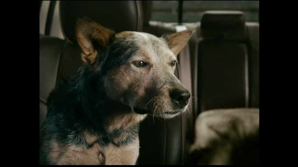 2013 Ram Laramie Longhorn TV Spot, 'Jealous Dog' - Screenshot 7