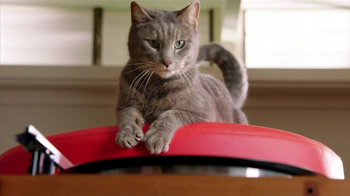 Purina Friskies TV Spot, 'Take A Spin' Song Based on Donovan