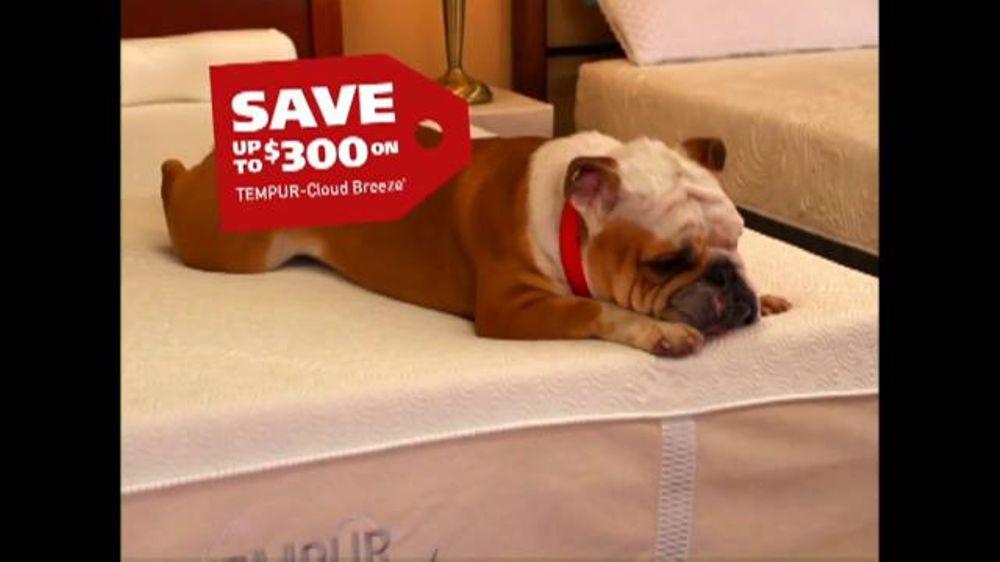 Mattress Discounters Good Deed Dogs Tv Spot