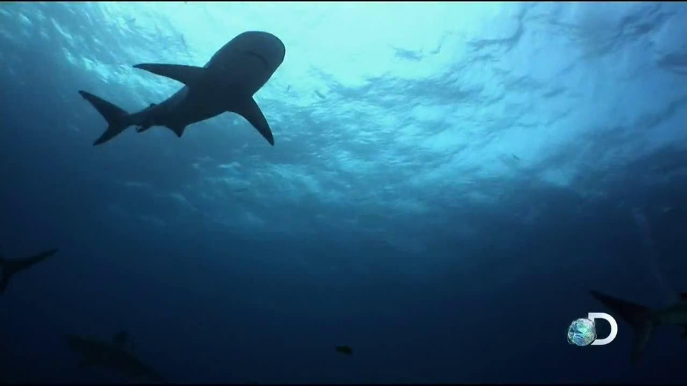 Discovery Channel Save the Sharks TV Spot Featuring Paul Walker - Screenshot 10