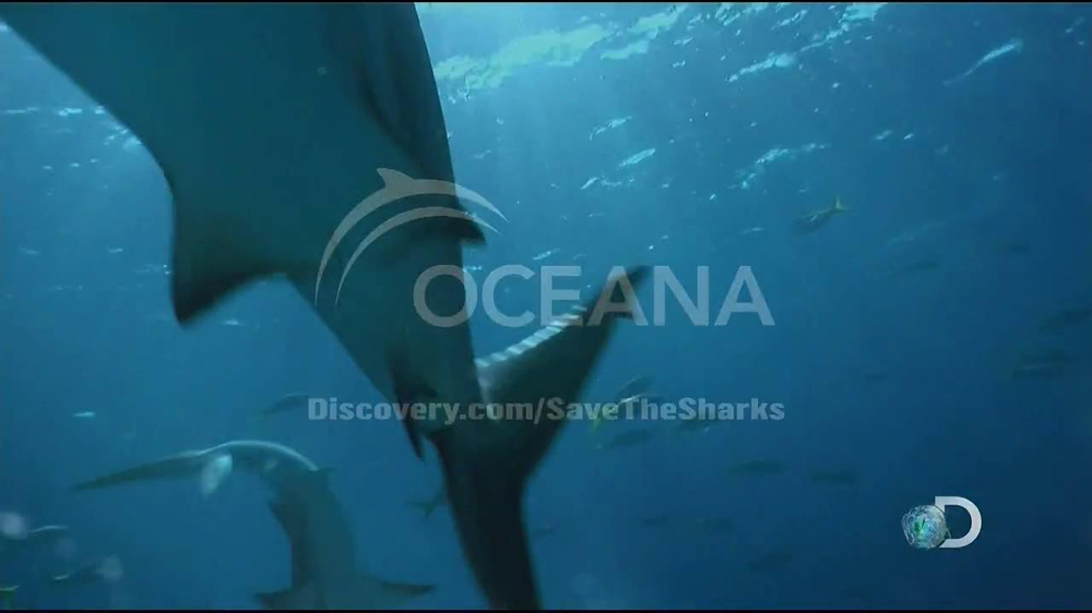 Discovery Channel Save the Sharks TV Spot Featuring Paul Walker - Screenshot 6