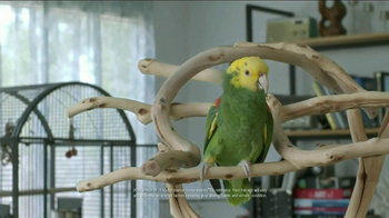 Volkswagen Best. Thing. Ever. Event TV Spot, 'Parrot' - Thumbnail 2