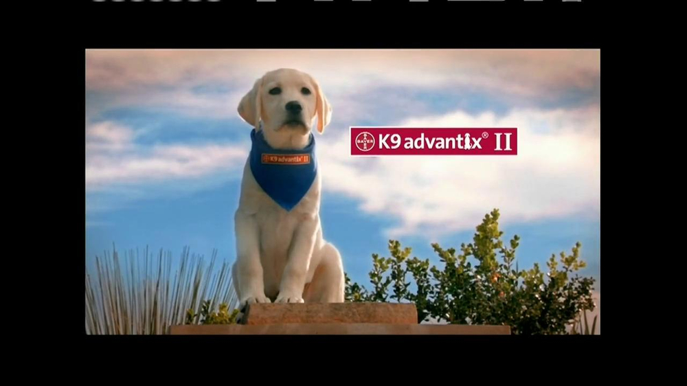 K9 Advantix II TV Commercial, 'Tick Nuisance' - iSpot.tv