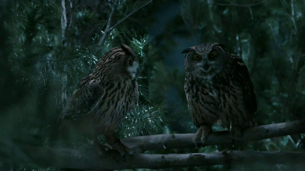 GEICO TV Spot, 'Owls' - Screenshot 10