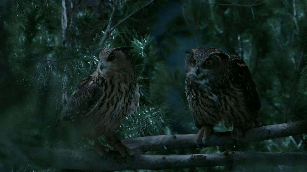 GEICO TV Spot, 'Owls' - Screenshot 7