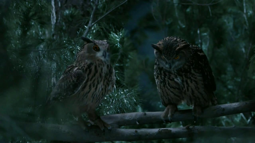 GEICO TV Spot, 'Owls' - Screenshot 8