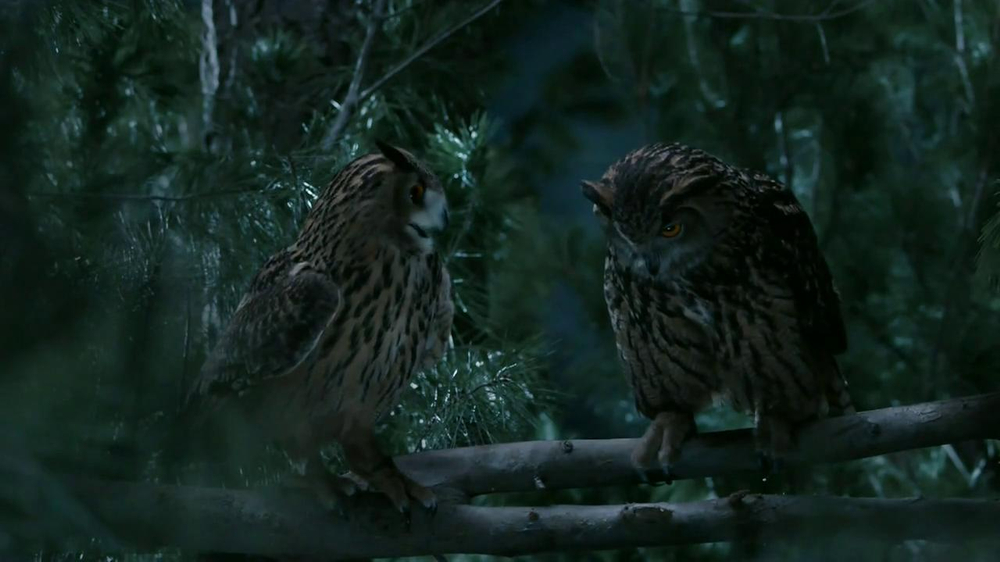 GEICO TV Spot, 'Owls' - Screenshot 9