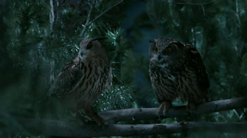 GEICO TV Spot, 'Owls' - Thumbnail 7