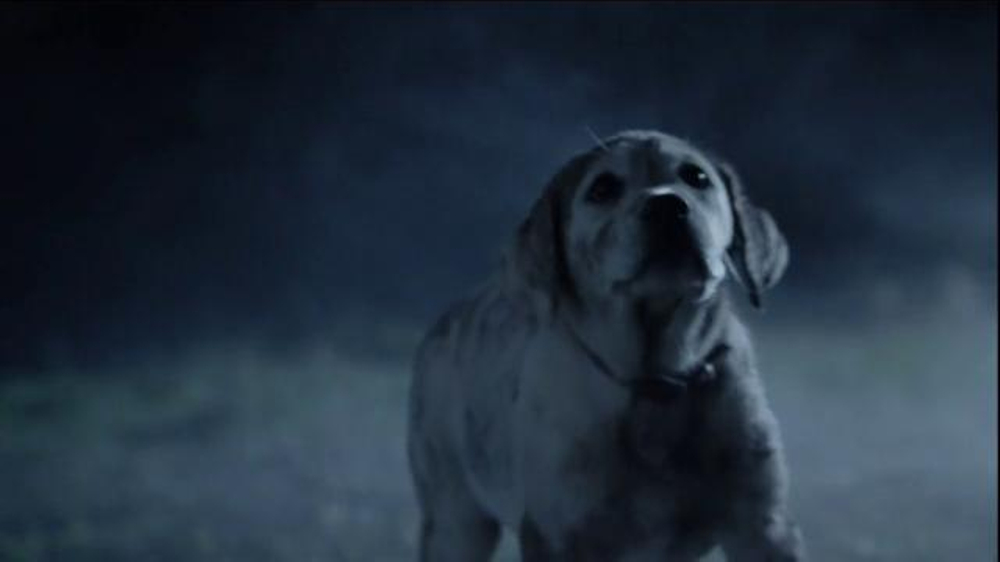 puppy love super bowl commerical Watch budweiser puppy commercial - budweiser super bowl commercial 2014 puppy love [extended] by videotise on dailymotion here.