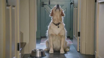PetSmart TV Spot, 'Low Price Food Brands' thumbnail