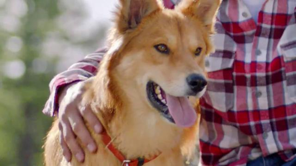 Cesar Dog Food Commercial Song